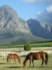 1134430_horses_in_the_field